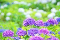 自然の植物に溢れている心休まる画像