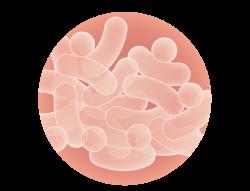 ナノ乳酸菌を拡大した画像