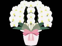 美の象徴、蘭の花の画像