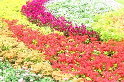 お花畑のイメージ